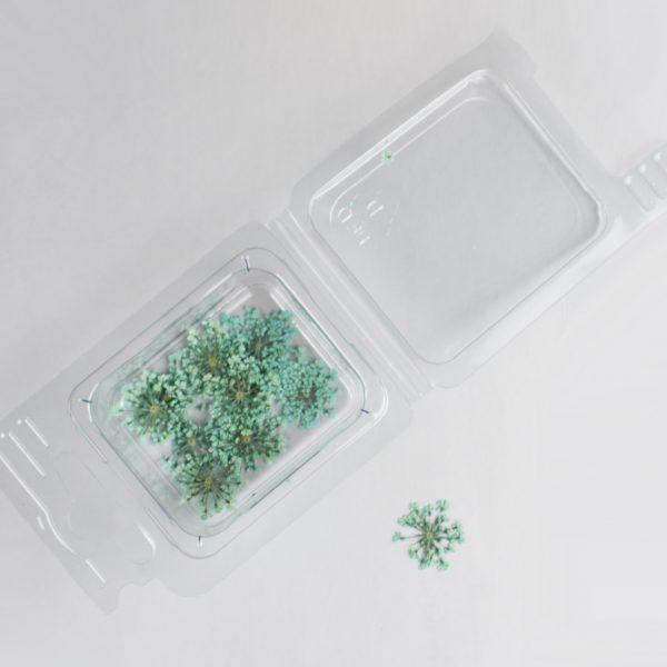 Fleurs séchées Fleurs Vert