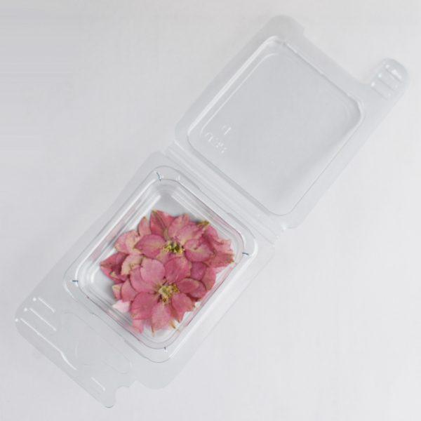Fleurs séchées Fleurs Rosa Cipria