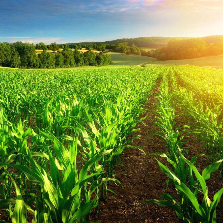Bio Résine : La résine époxy écologique est un choix vert et renouvelable !